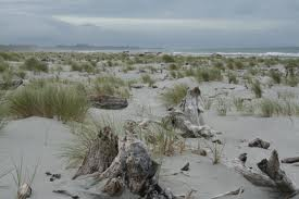 Rustic terrain at a New England beach shoreline with white sand, vegetation & driftwood.